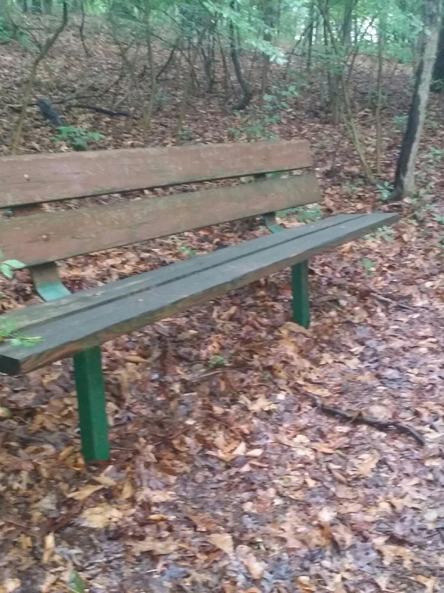 Kid's Castle Nature Preserve bench