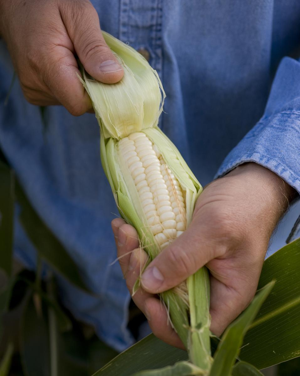 Tasting: Corn, New Mexico Magazine