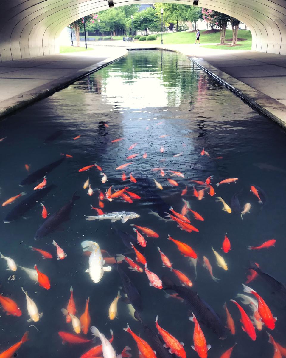 big spring park fish