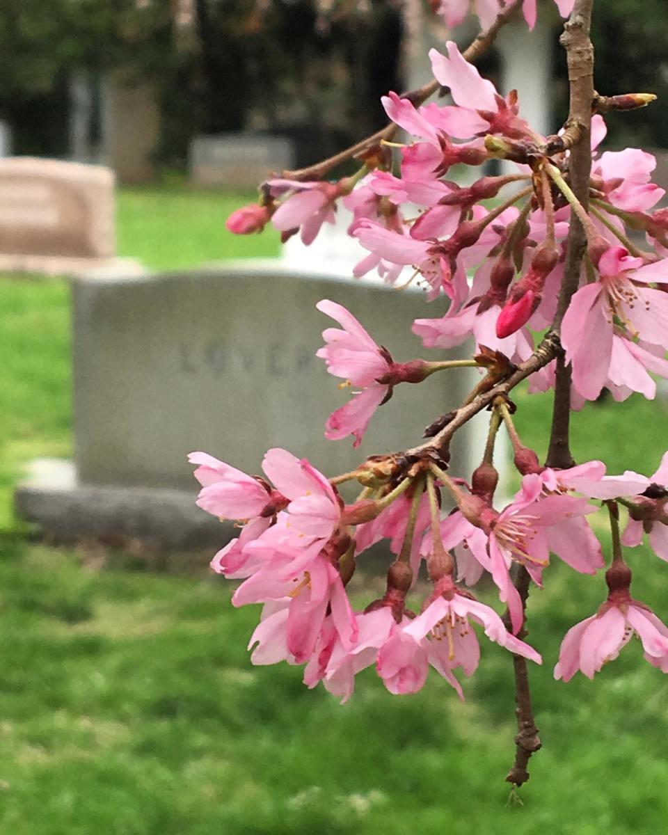 lex cemetery