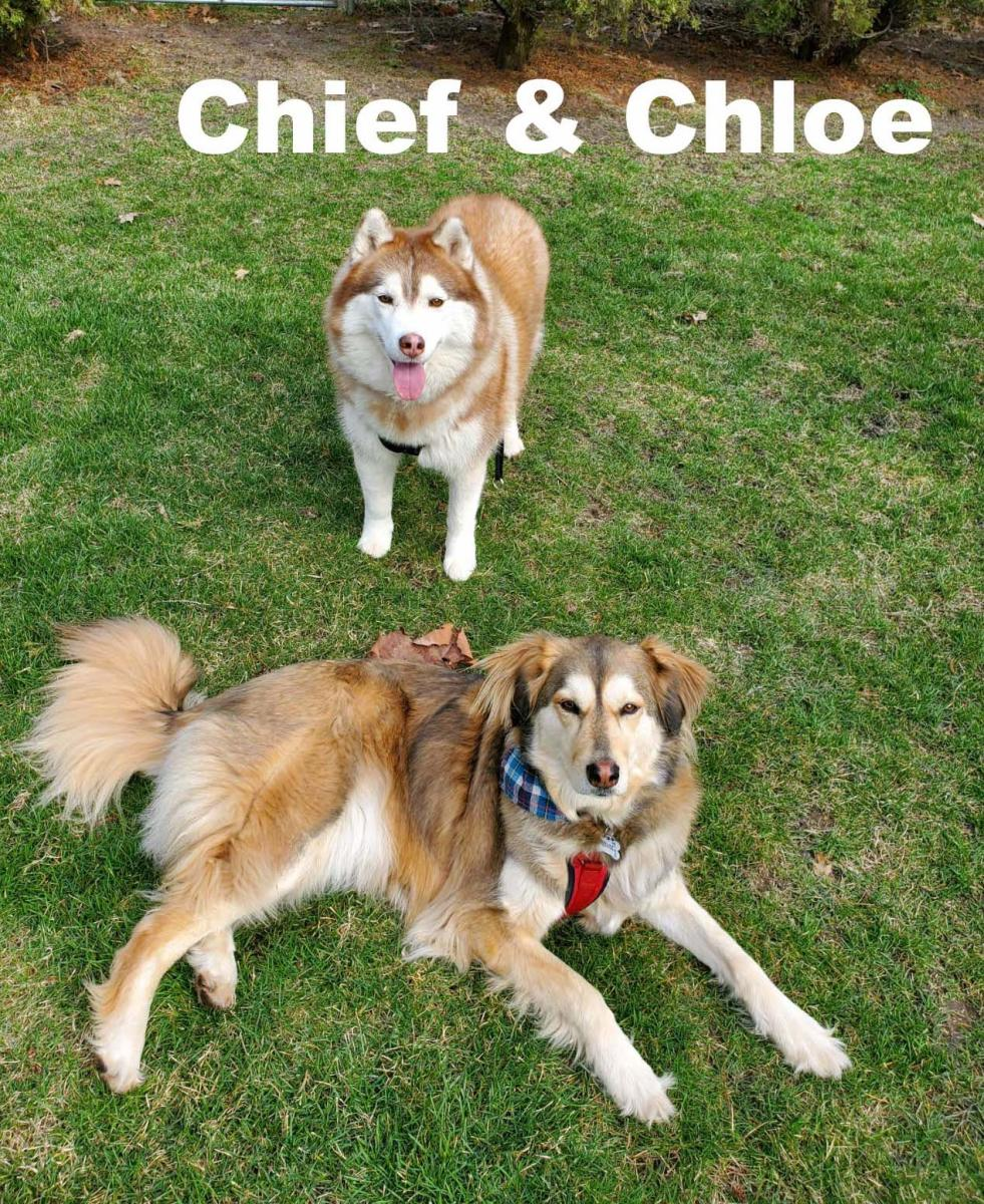 Chief and Chloe