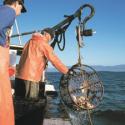 Fishermen with Crabpots