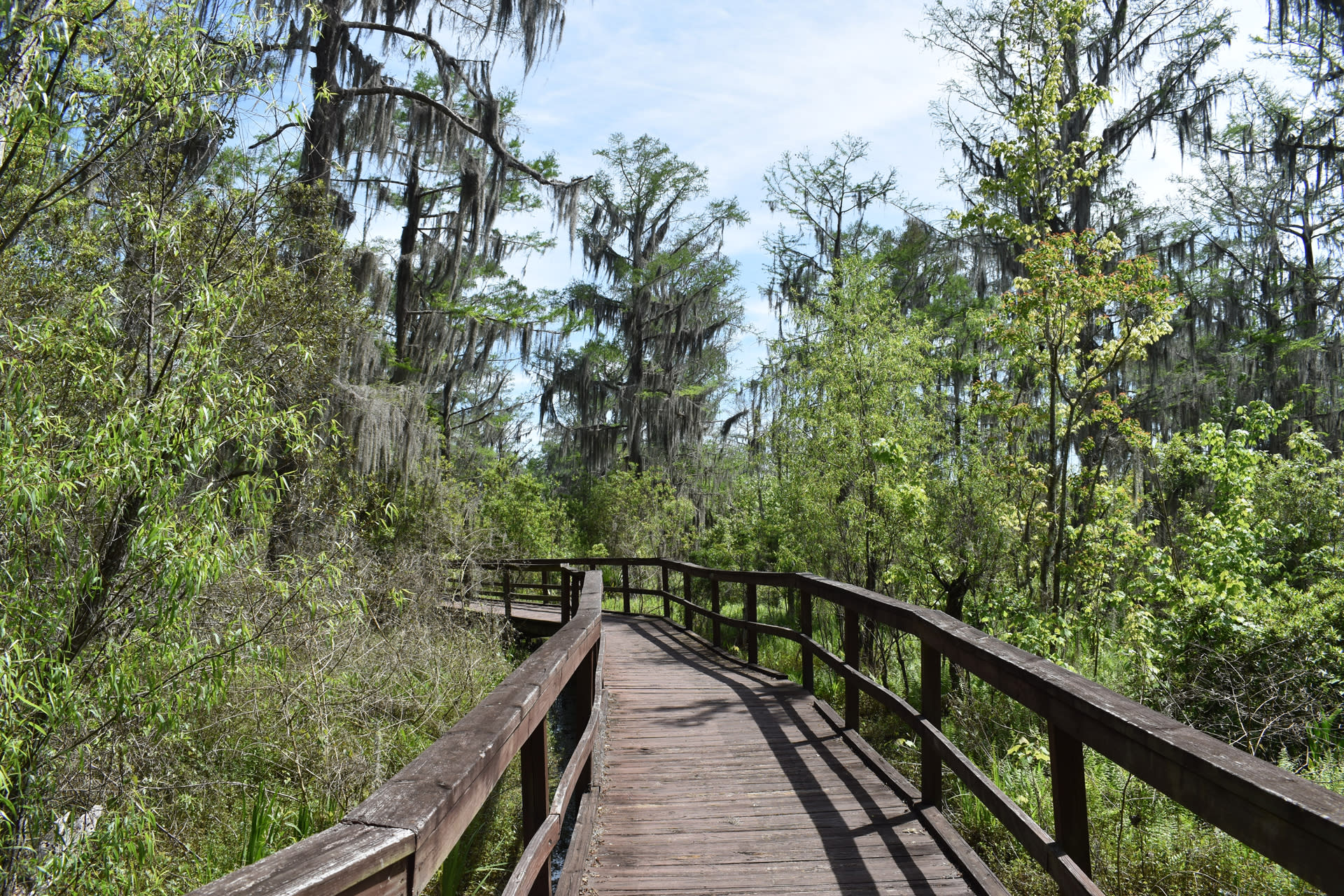 Wetland Trace