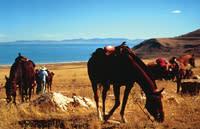 Antelope-Island-Horseback-Riding