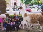 Enjoy a fun-filled day in the crisp autumn air at the Salmon River Festival on Saturday, October 6. From 11 a.m. to 4 p.m., come to the south park on Route 11 in Pulaski for kids' games and activities, alpacas, crafts, food and live music. Admission is free.