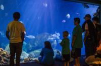 Aquarium Family