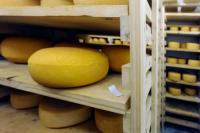 Creamery Cheese