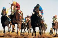 Finger Lakes Gaming & Racetrack thoroughbred horse racing