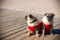 Pet friendly delaware beaches