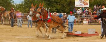 Benson Mule Days pull