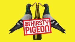 BCPS_Thirsty Pigeon