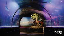 Tunnel through swim tank at Shreveport Aquarium