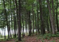 Hiking at Mauch Chunk Lake Park