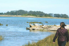 Audubon Birdwalk Hikshari Trail (Eureka Waterfront)