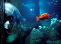 Monterey Bay Aquarium - Attractions Page
