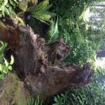 Rhododendron Species Botanical Garden in Federal Way