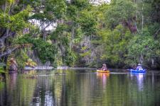 Kayaking along Spruce Creek Preserve