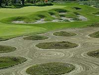 birck boilermaker golf