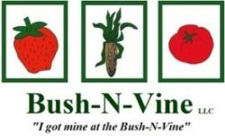 BNV-logo-300x182.jpg