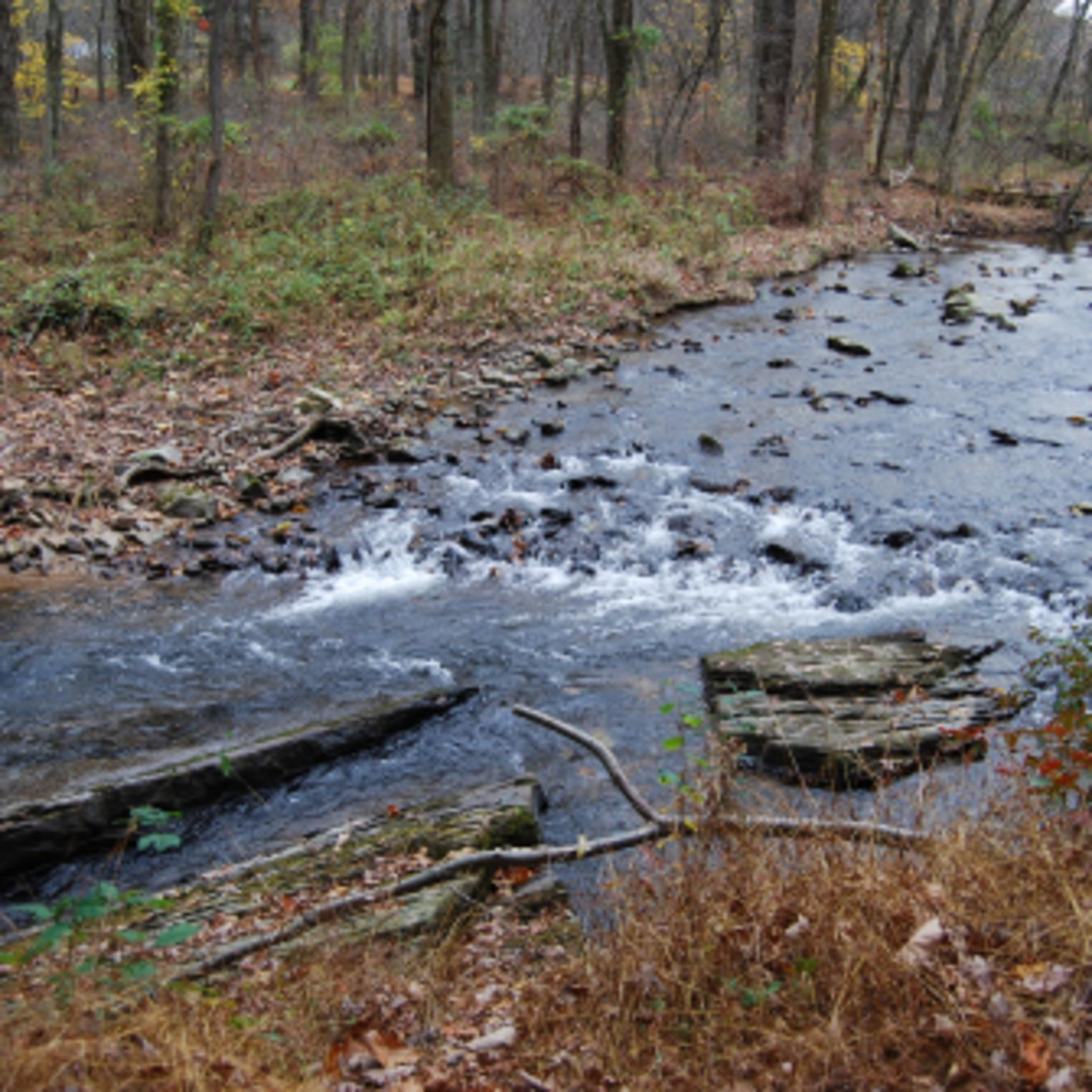 Mountain Creek in Mt Holly Marsh Preserve