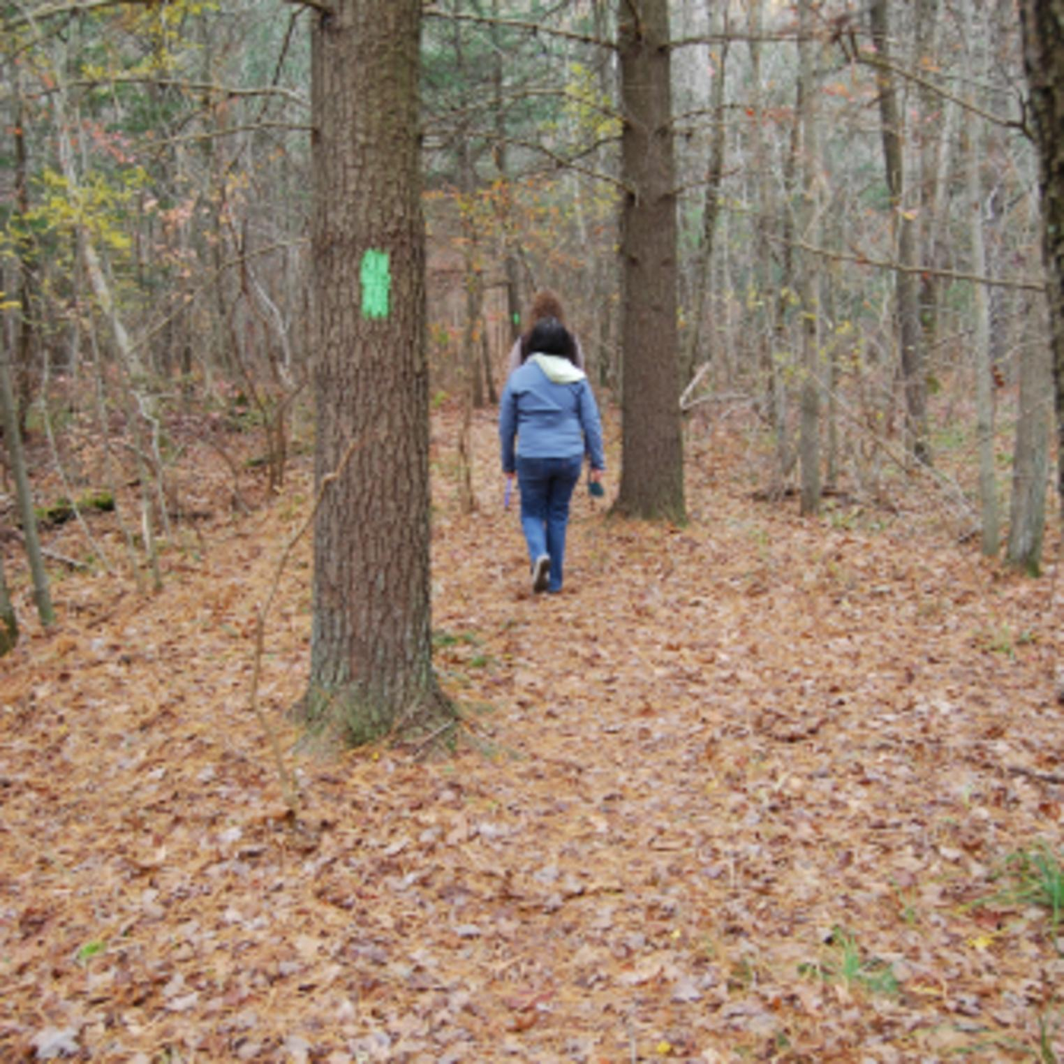 Hiking Spring Trail at Mt Holly Marsh Preserve
