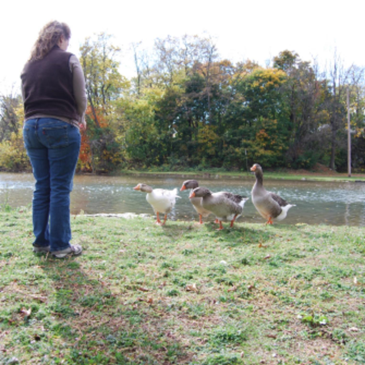 Feeding the Ducks at Laughlin Mill