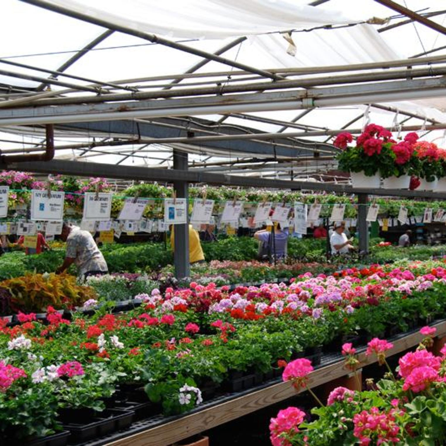 Choose from a variety of flowers.