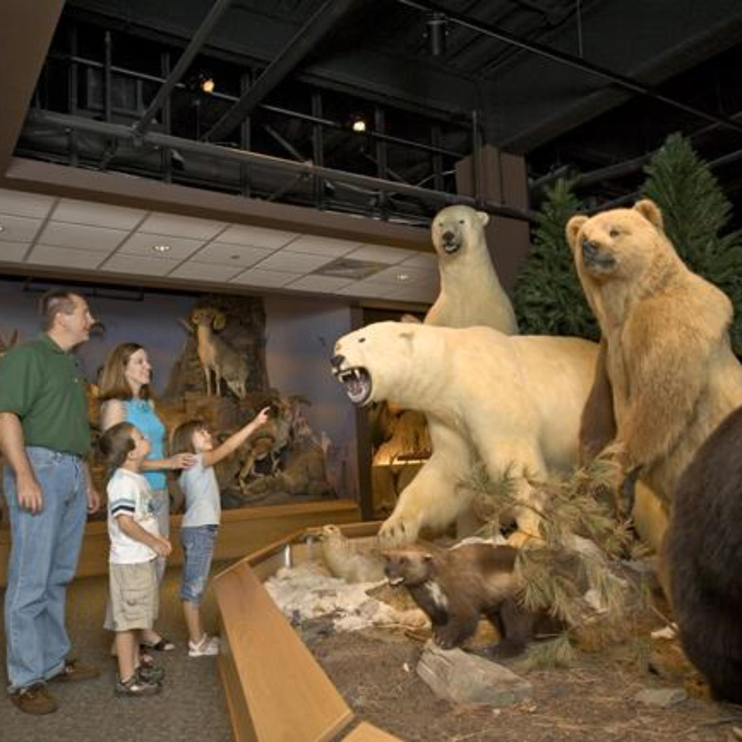 Polar Bears at Oakes Museum at Messiah College