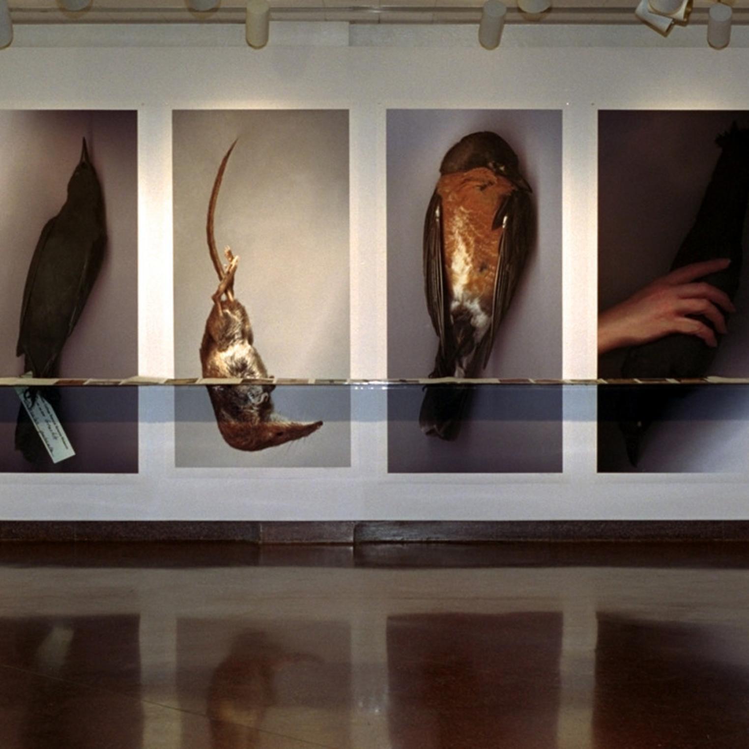M. Louise Aughinbaugh Gallery