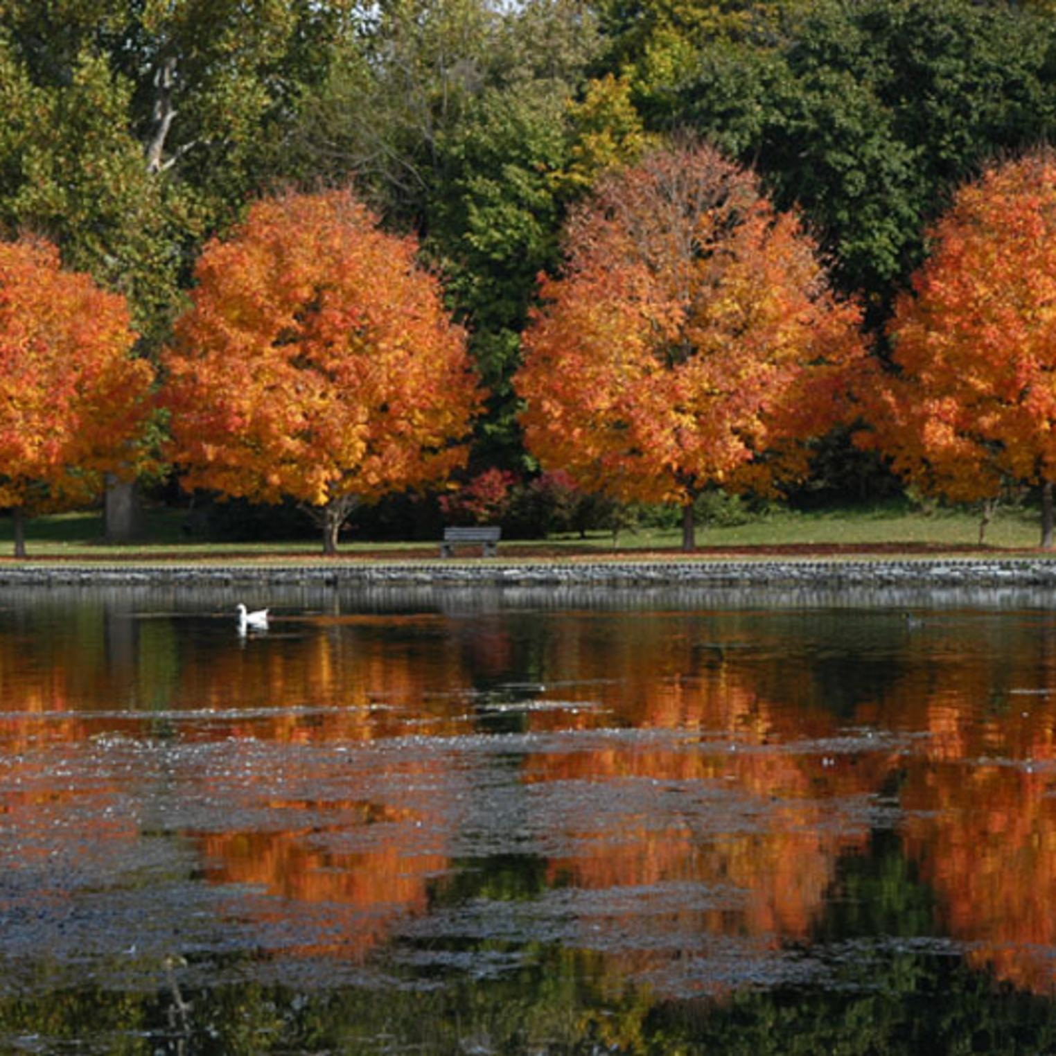 Children's Lake in Fall