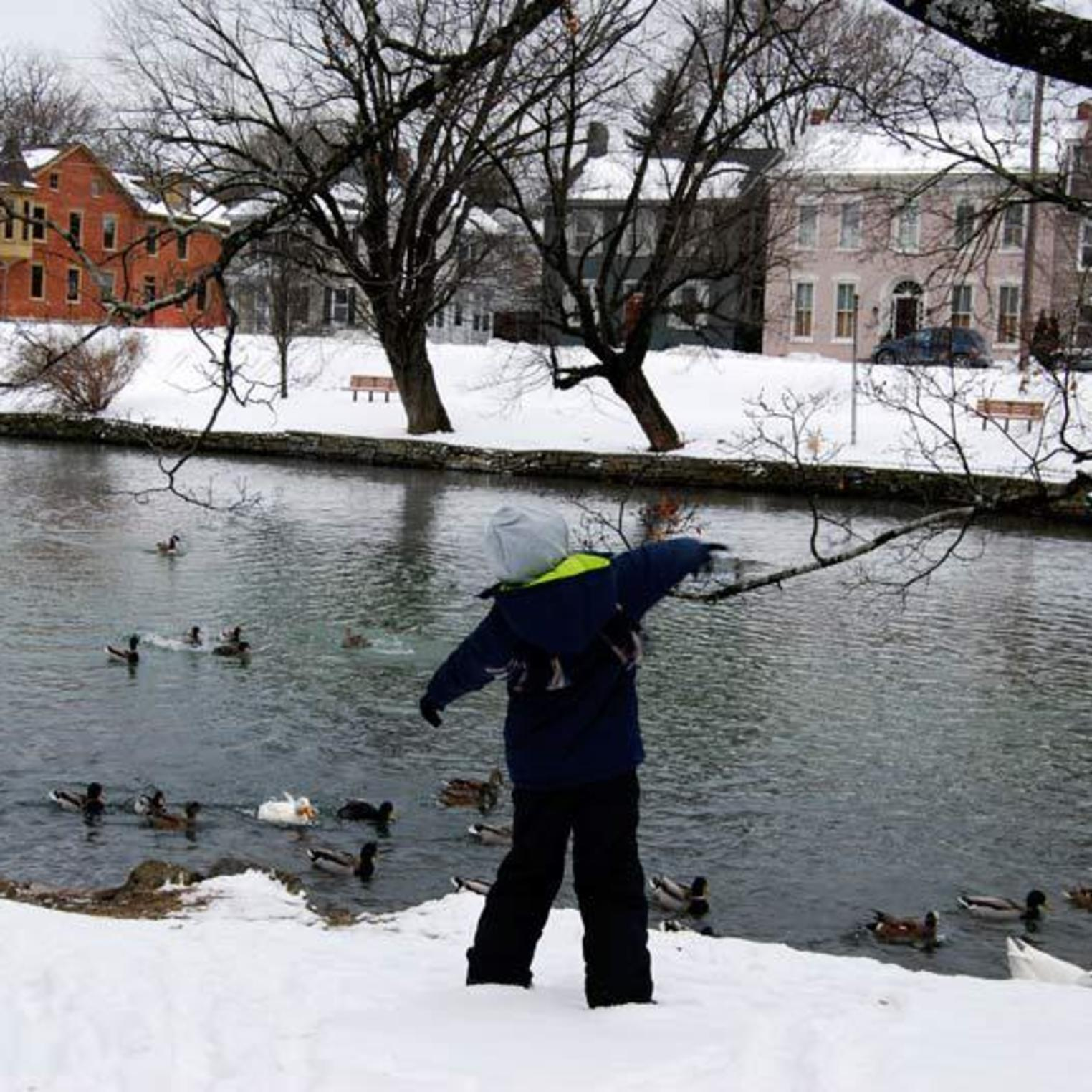 Feeding the Ducks at Children's Lake in Winter