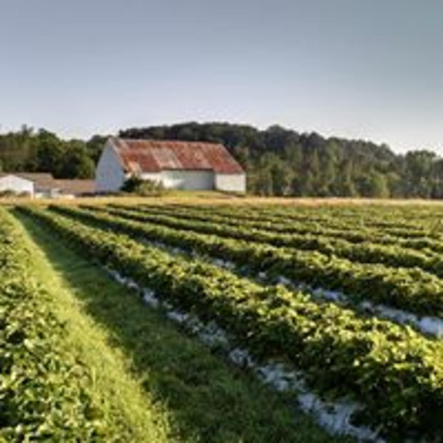 Cross the Creek Farm