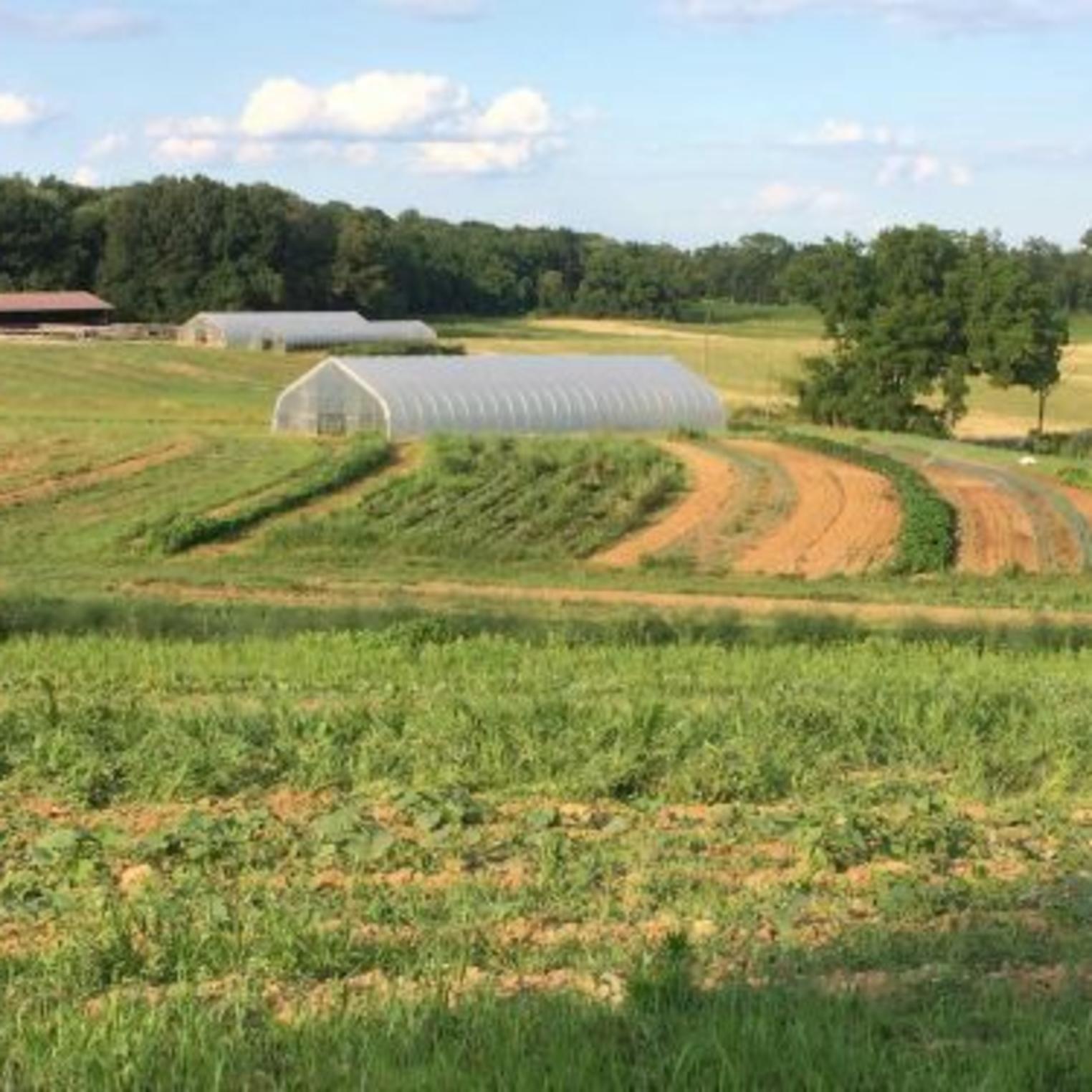Everblossom Farm Field