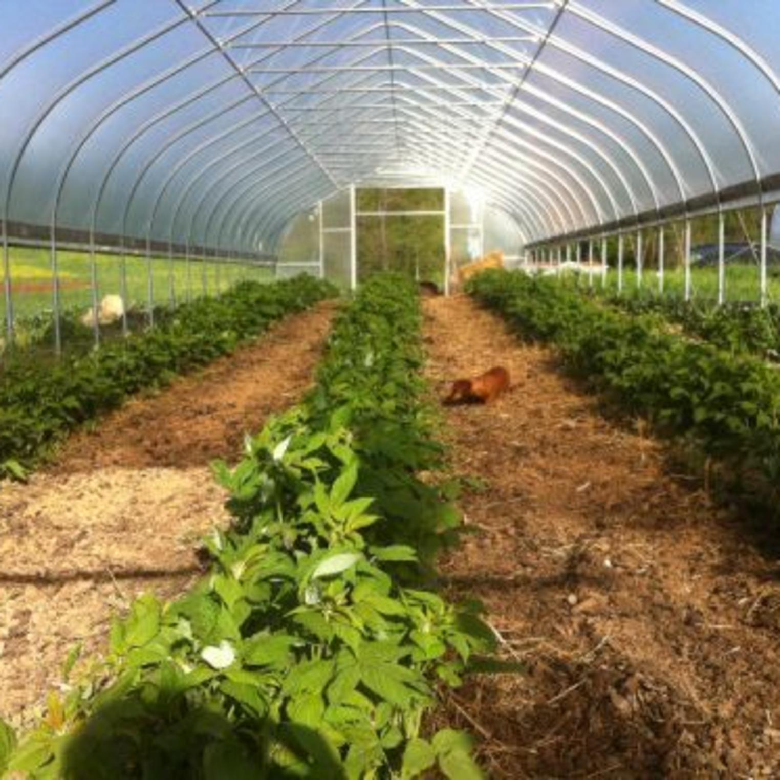 Greenhouse at Everblossom Farm
