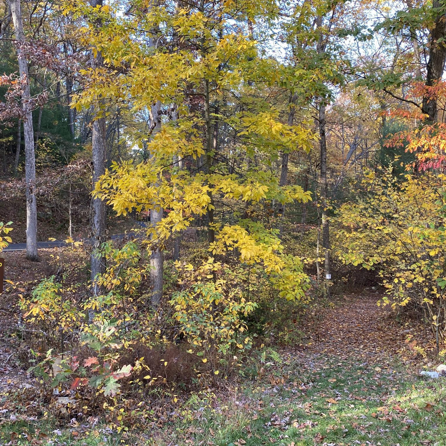 Kings Gap Hollow Trail