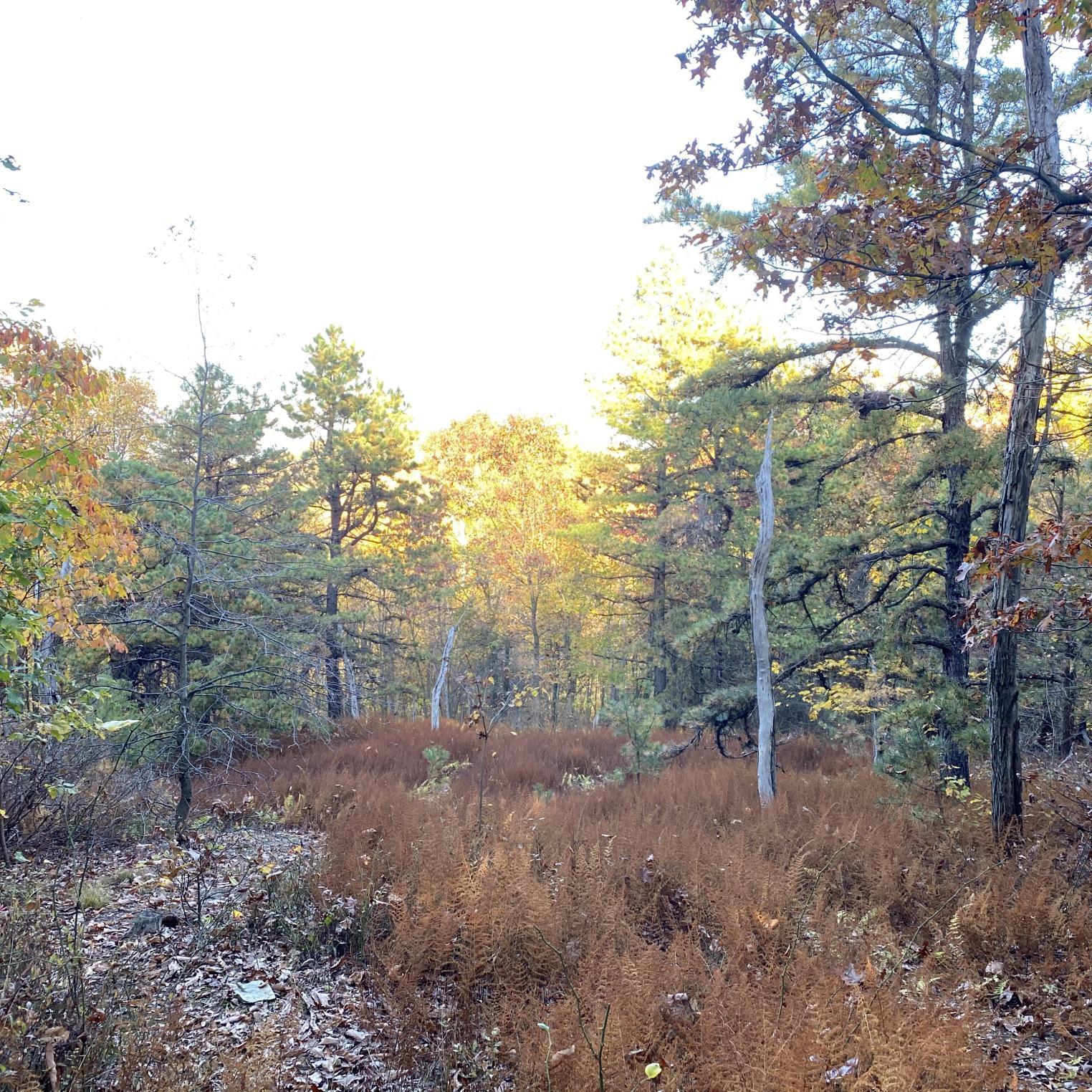 Locust Point Trail