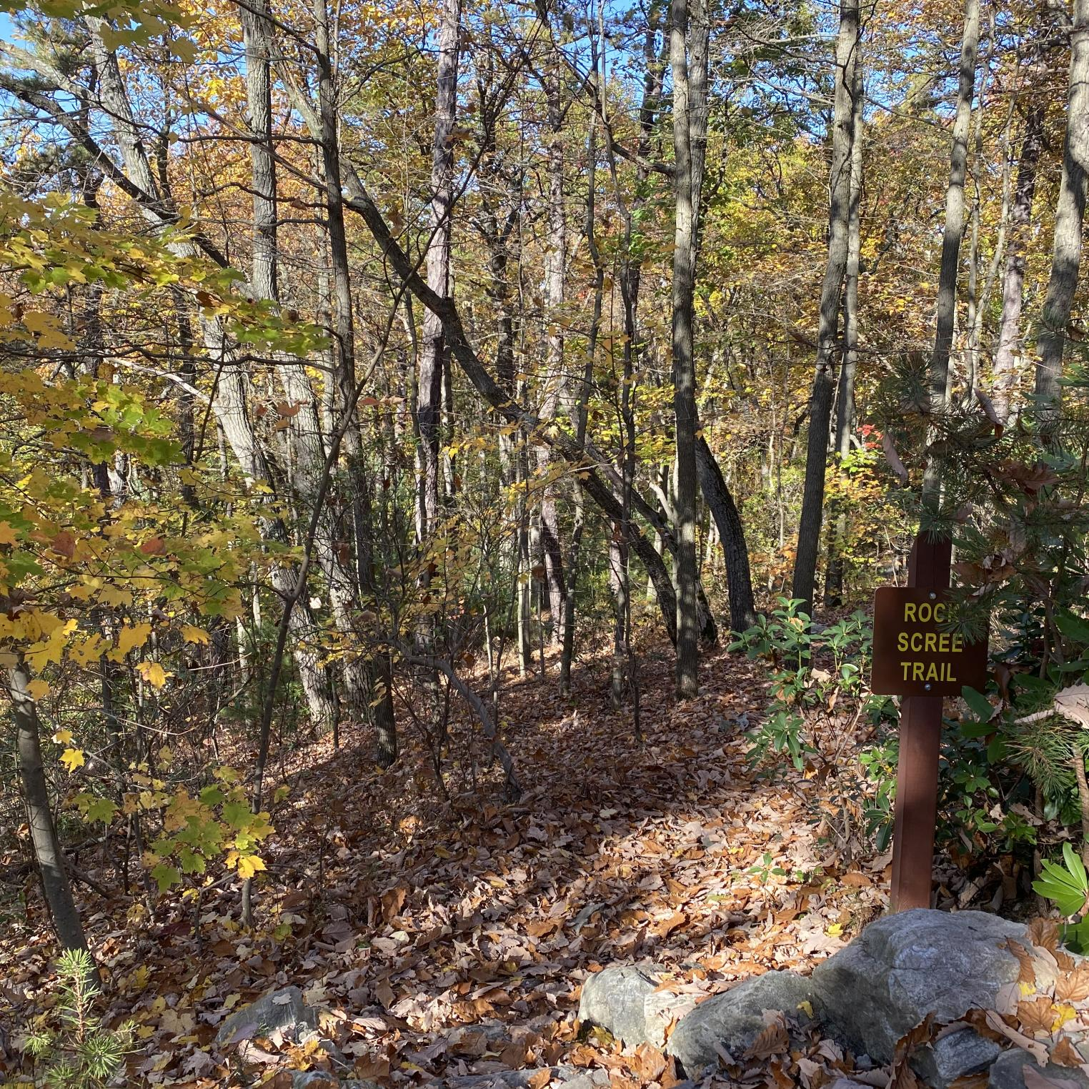 Rock Scree Trail