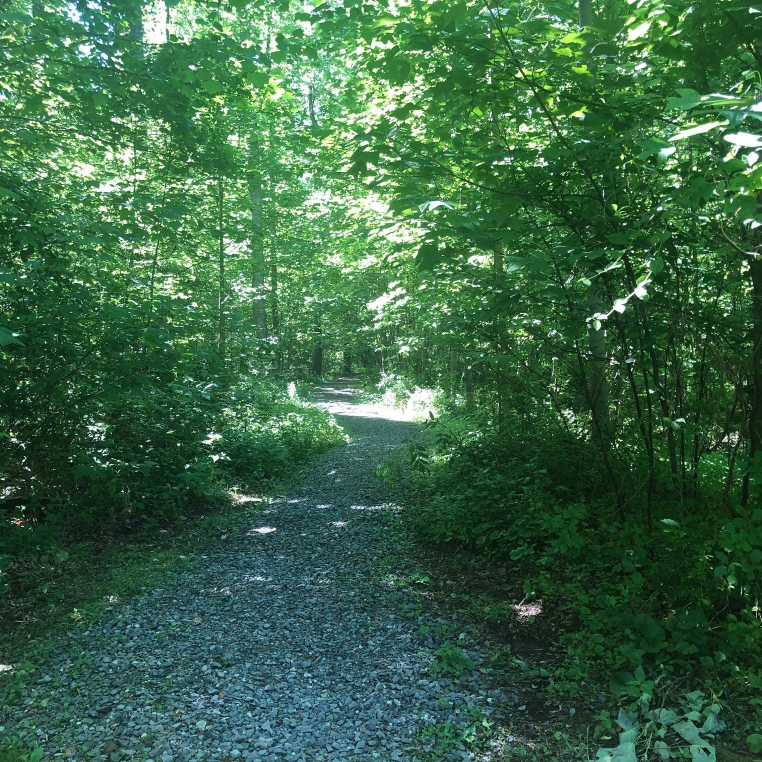 Irish Gap Hollow Trail