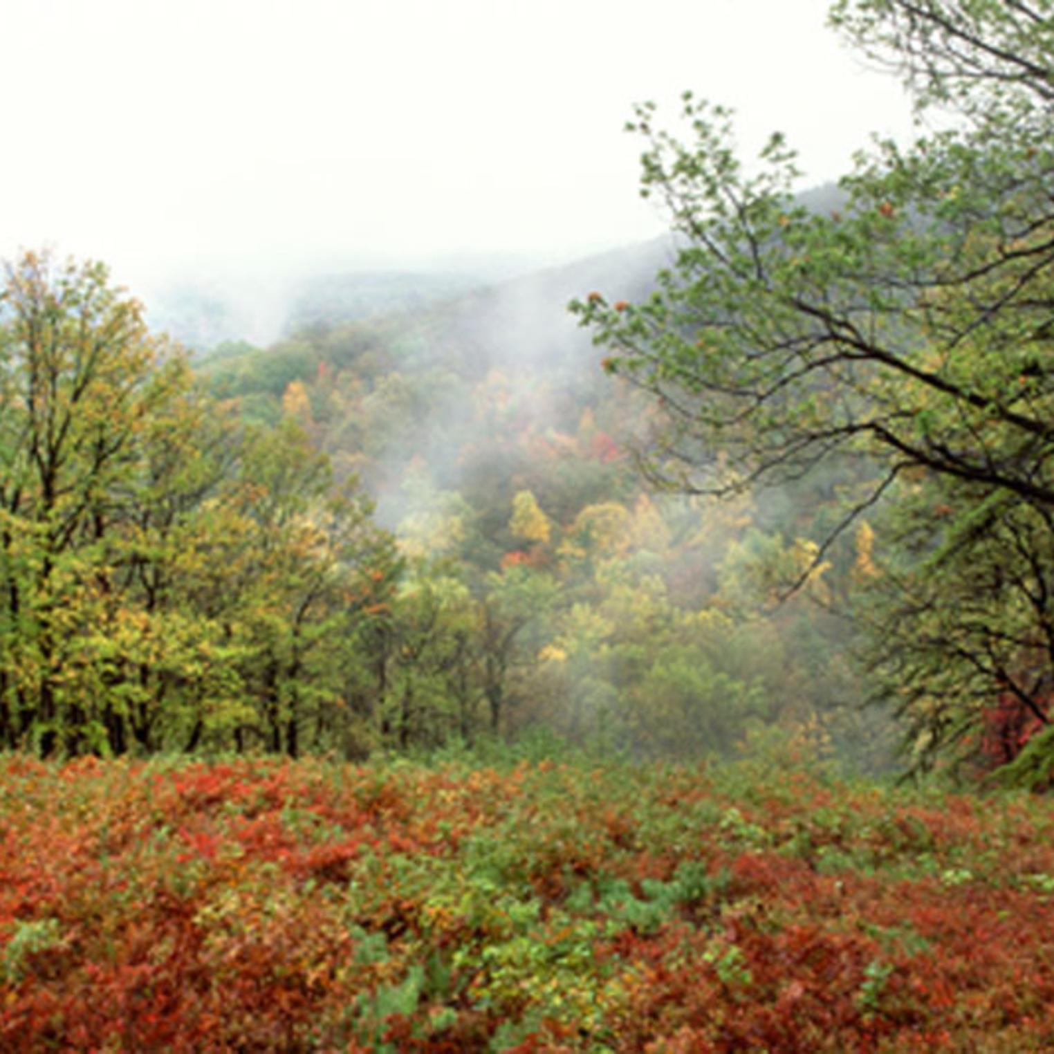 Autumn view at Kings Gap Environmental Education Center
