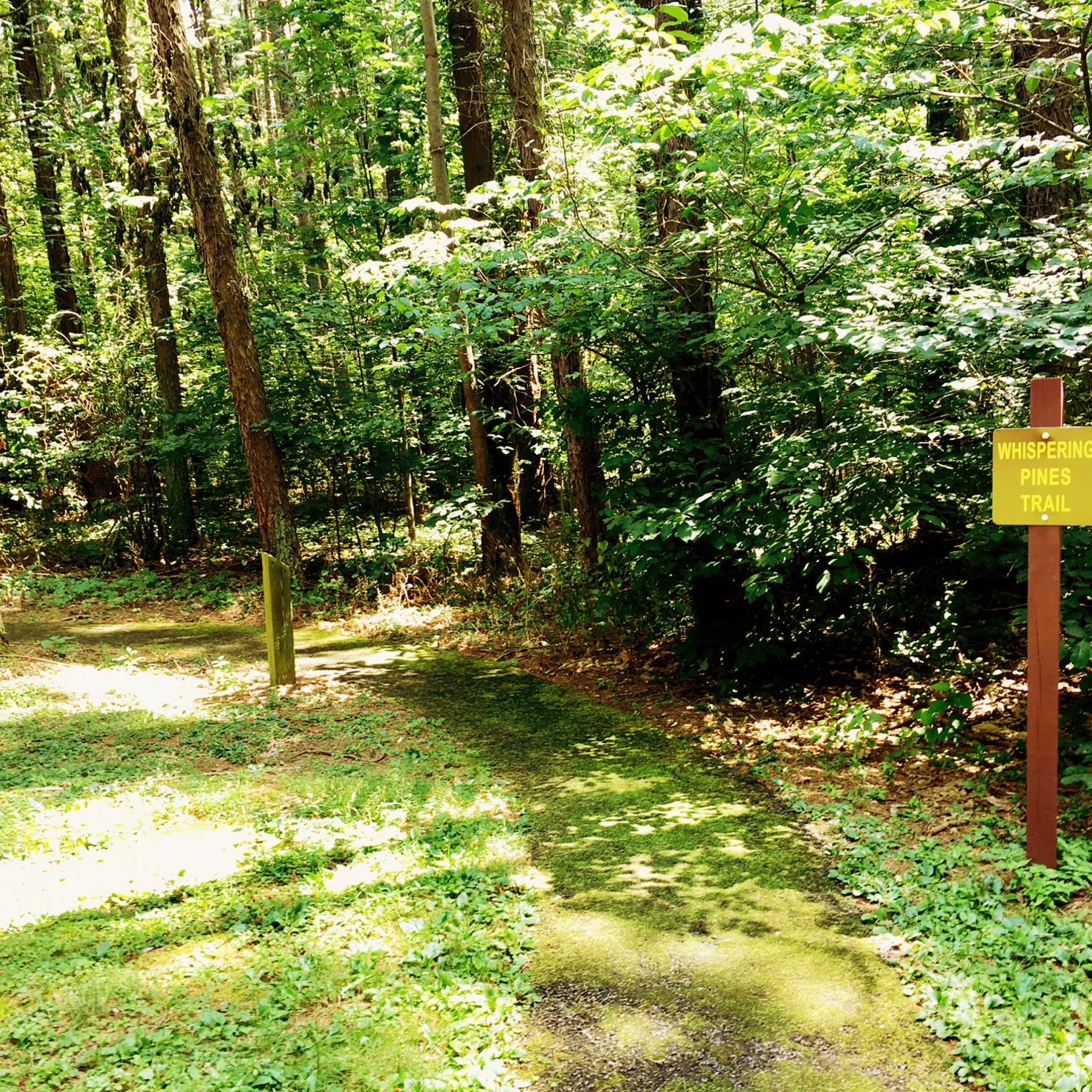Whispering Pines Trail at Kings Gap