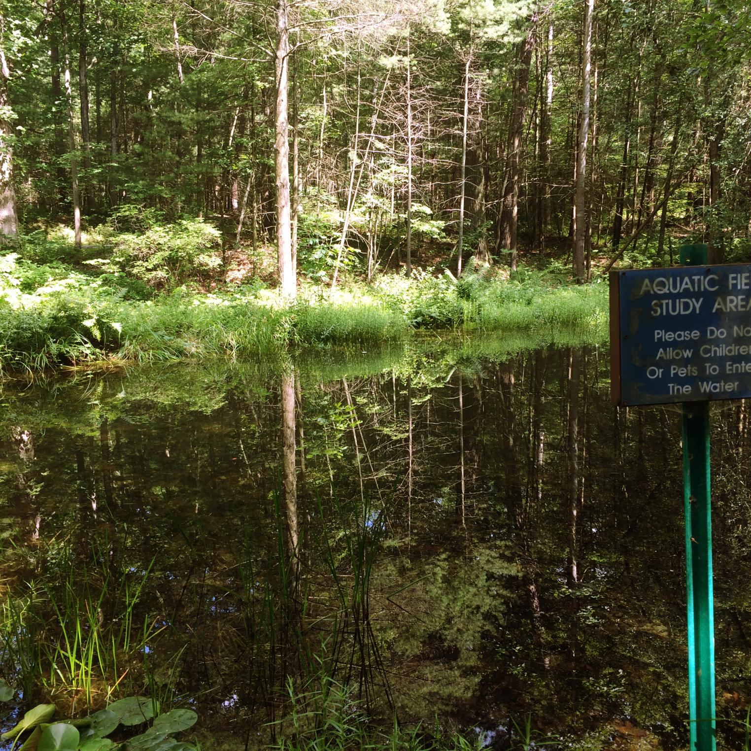 Pond along the Watershed Trail at Kings Gap