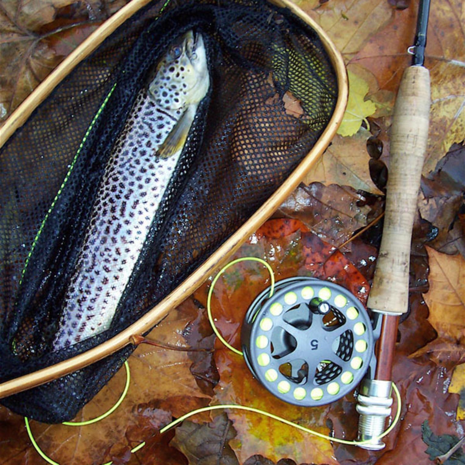 Wild trout caught on LeTort Spring Run.