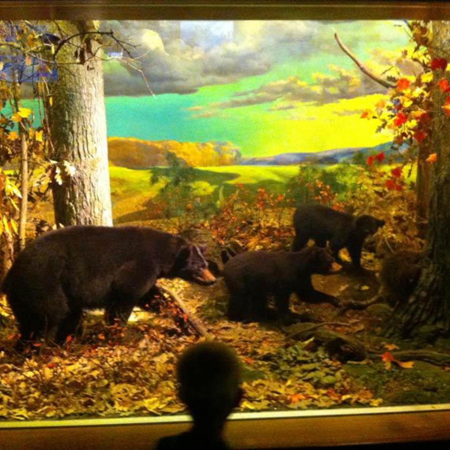 State Museum of PA