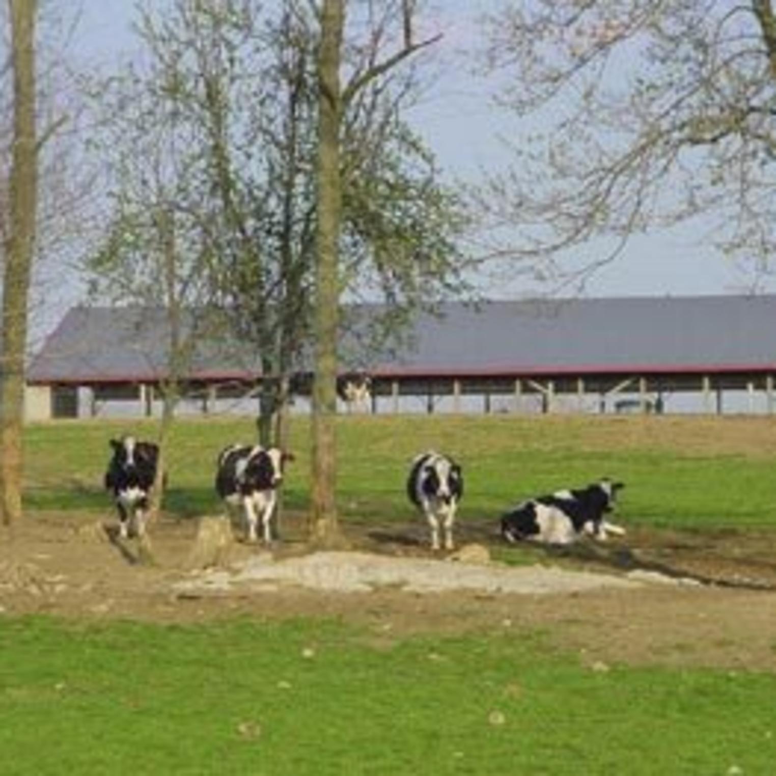Stoner's Dairy Farm