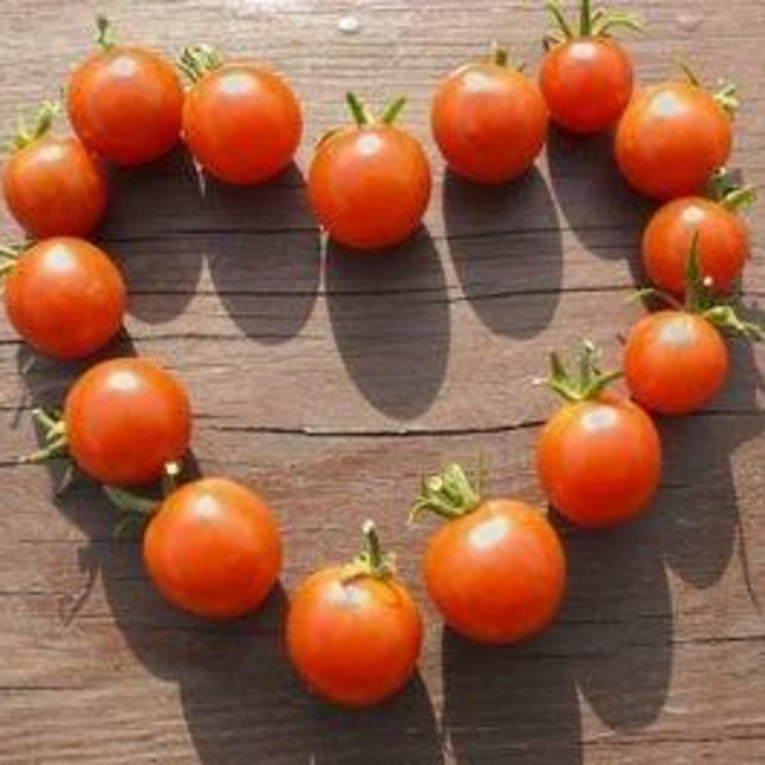 Tomatoes from Everblossom Farm