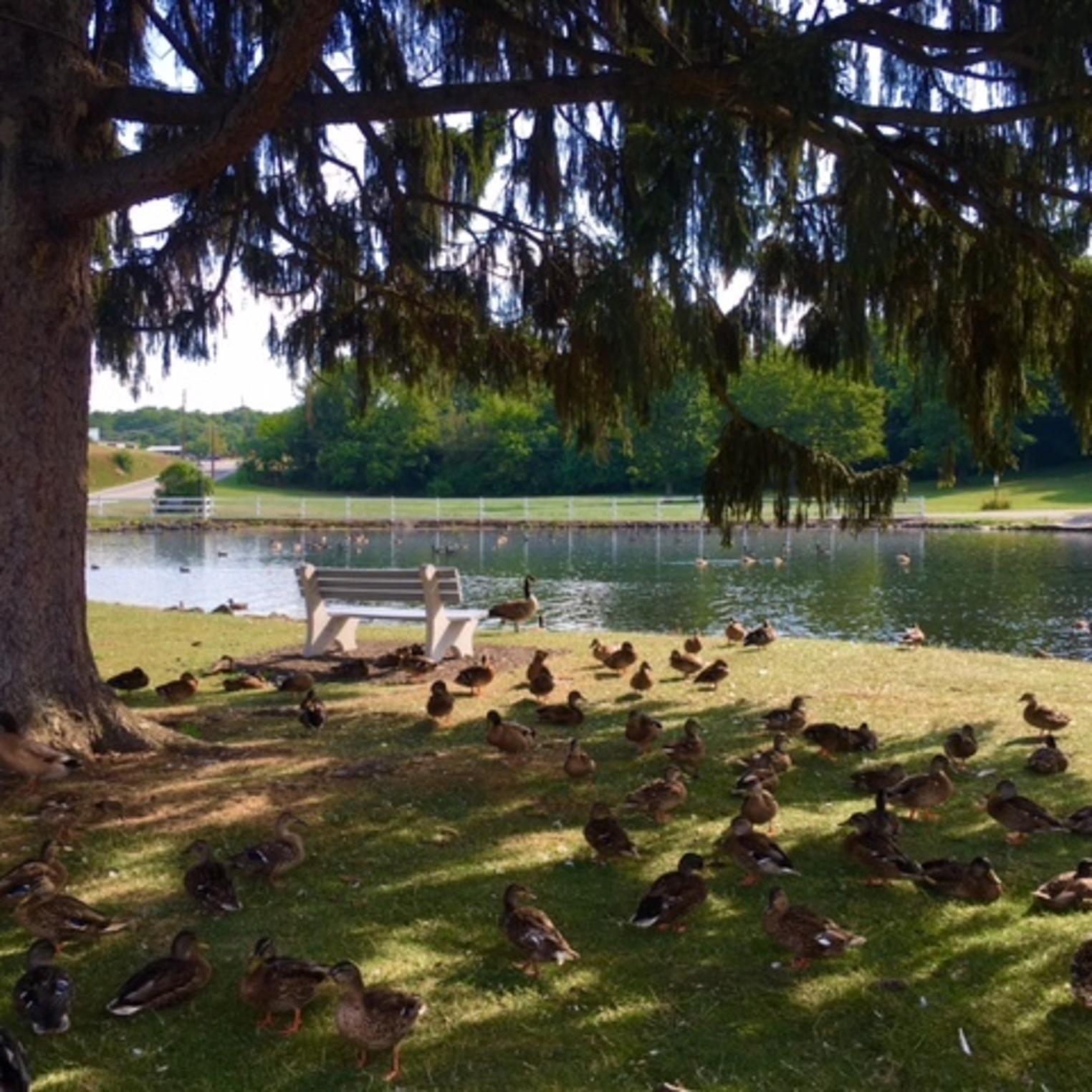 Dykeman Park