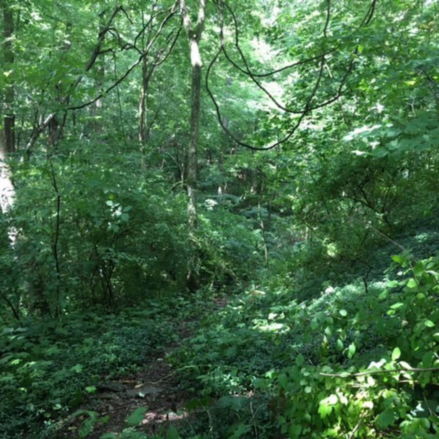Pine Hill Arboretum