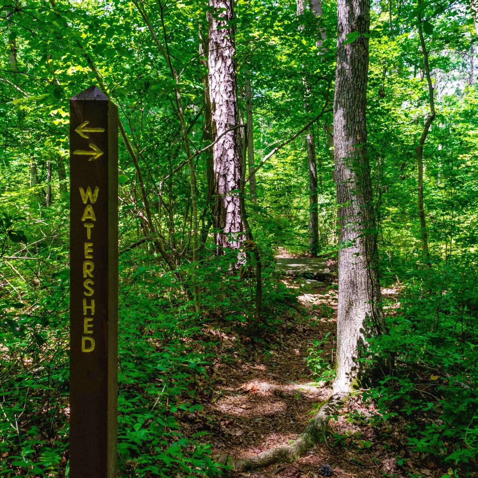 Watershed Trail @ Kings Gap