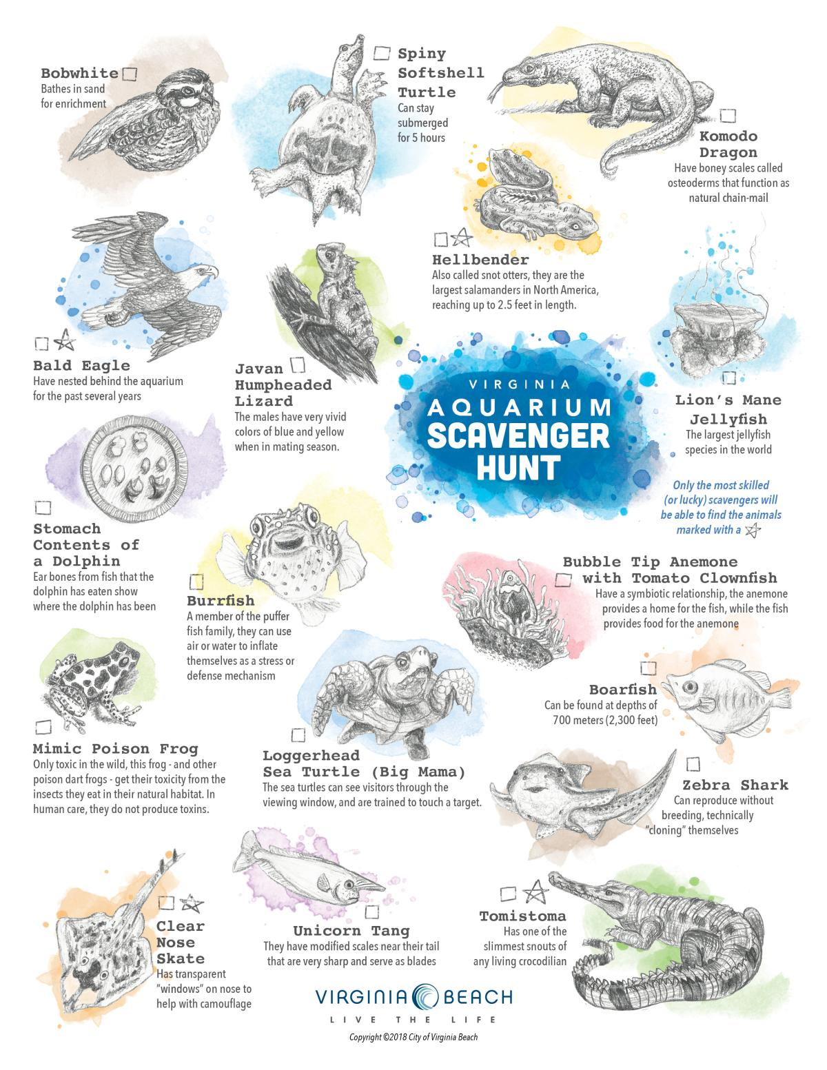 Animals/species to find on Virginia Aquarium Scavenger Hunt