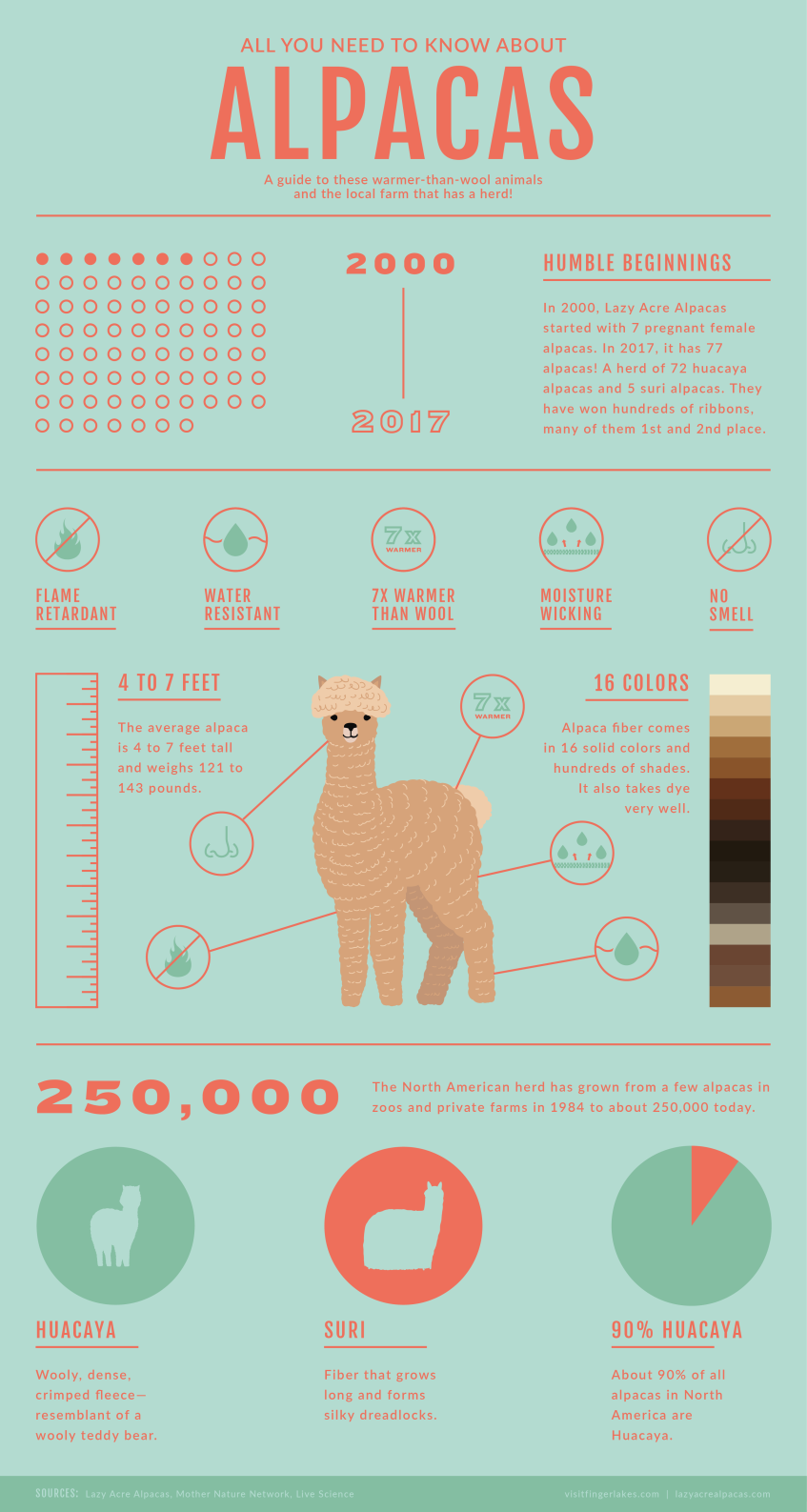 lazy-acre-alapcas-bloomfied-infographic-alpaca-facts